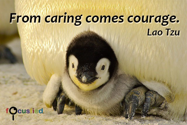 Lao-Tzu-From-caring-comes-courage-focusfied