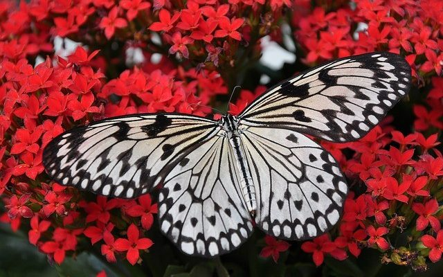 Challenges create greatness: Story of a cocoon and a butterfly